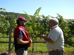Brandon and Dave Page talk vine and grape care.