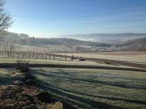 frost vineyard